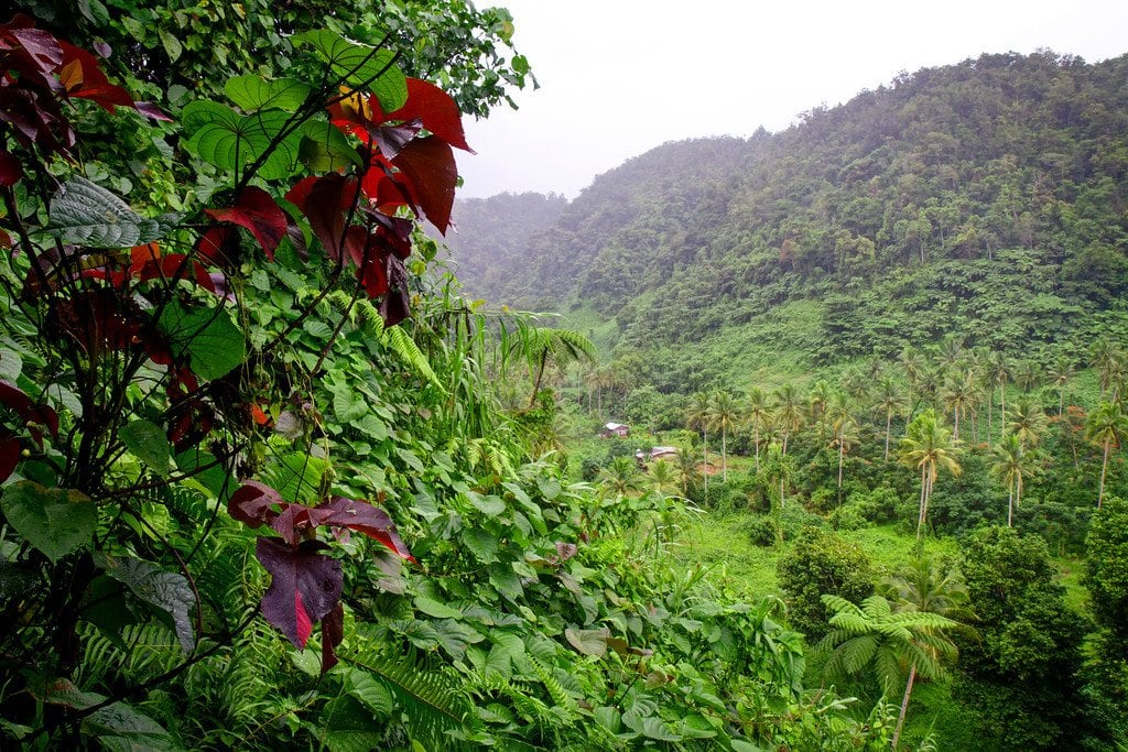 Taveuni Rainforest Fiji