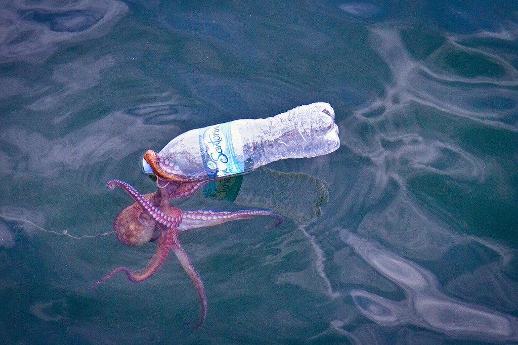 Octopus Veracruz Mexico