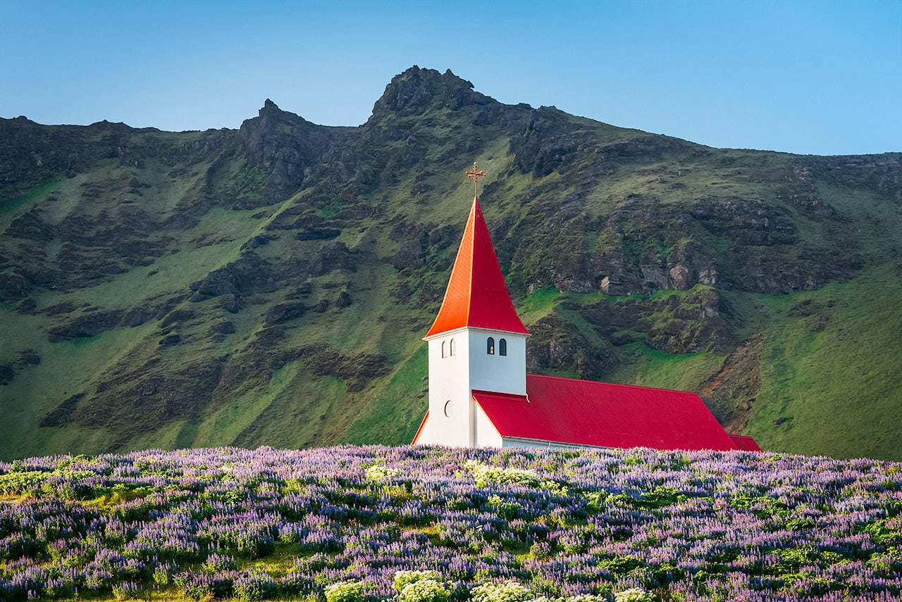 Spring Wildflowers in Iceland