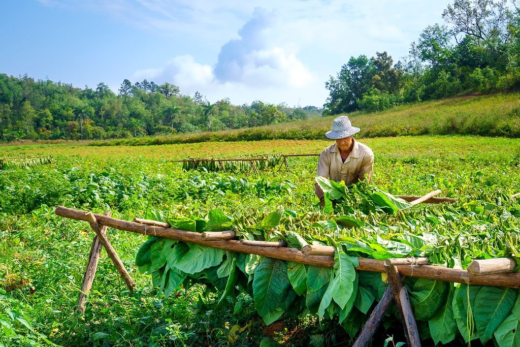 Farm in Vinales Cuba