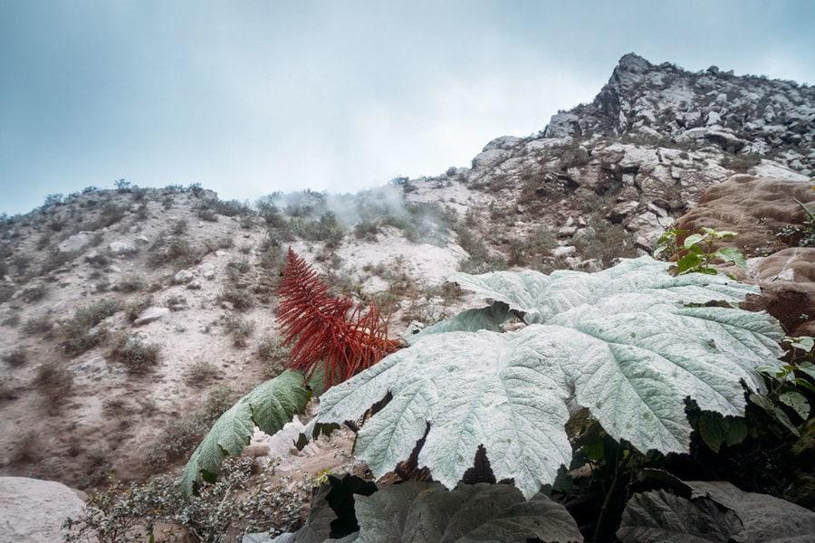 Volcanic Plants